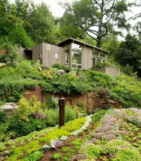 Два лесных домика в США