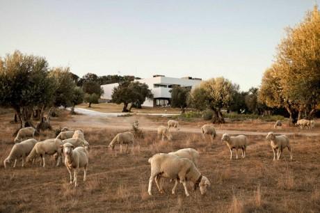 Загородный дом в Португалии 9