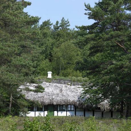 Лесной дом из водорослей в Дании