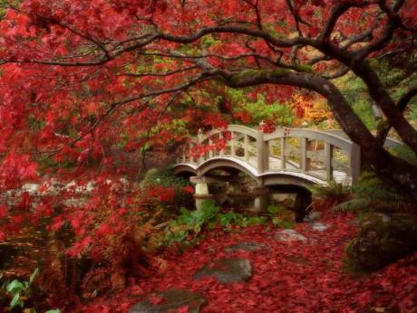 Мосты в японском саду