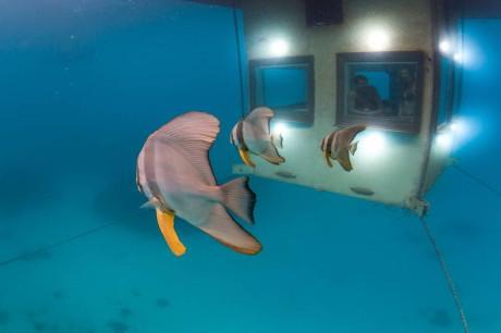 """Дом """"Манта"""" с подводной комнатой (Manta Underwater Room) в Танзании от Genberg Underwater Hotels."""
