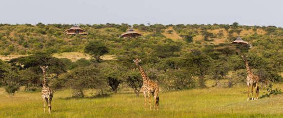 Сафари-лагерь в Кении