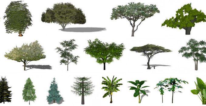 Архив растений, деревьев и кустарников в sketchup  | Блог