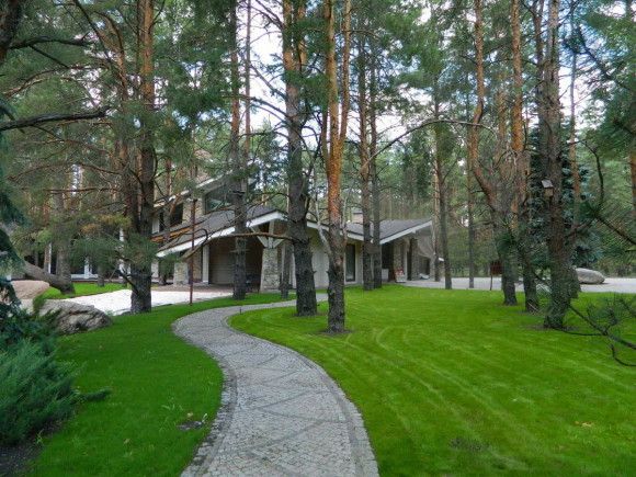 House in a pine forest 8